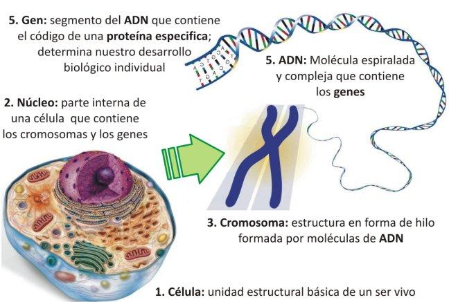 Genética Www Aviariopacogil